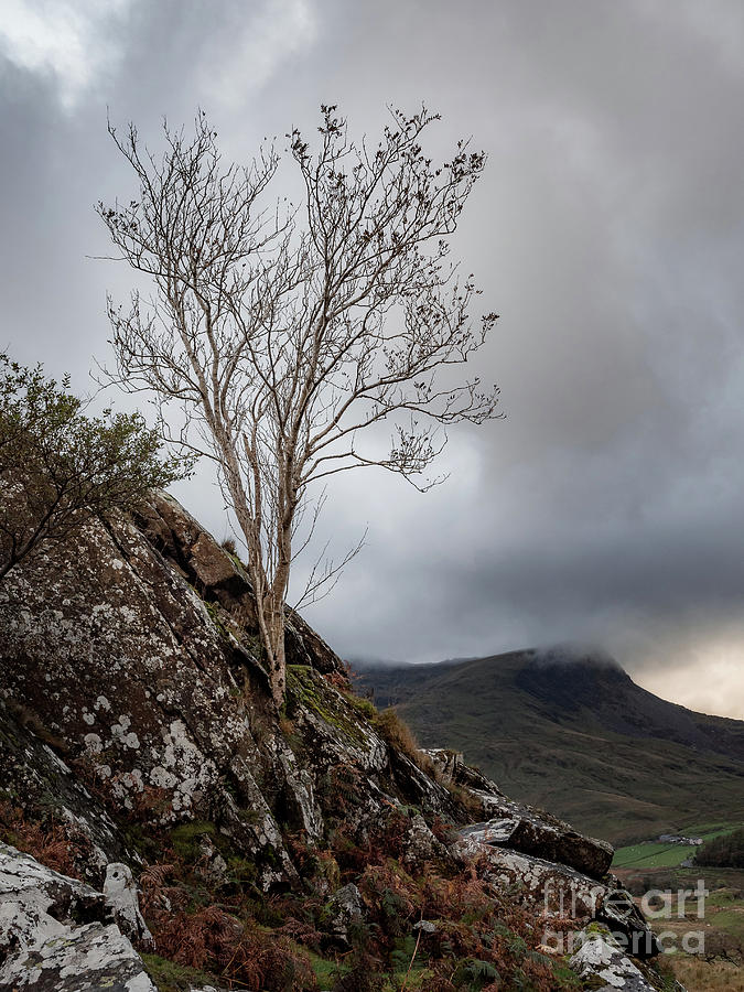 A Lone Tree In The Hills Of Snowdonia National Park Photograph