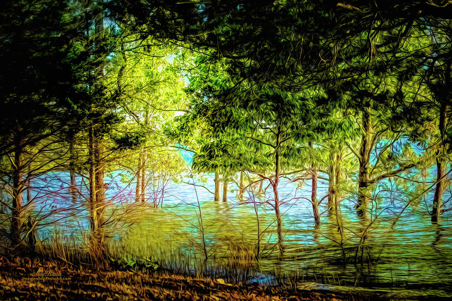 Trees Digital Art - A Moment In Time by Mike Braun