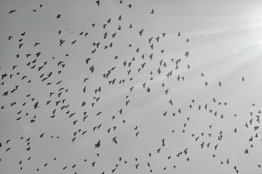 A Murder of Crows by Robert Wilder Jr