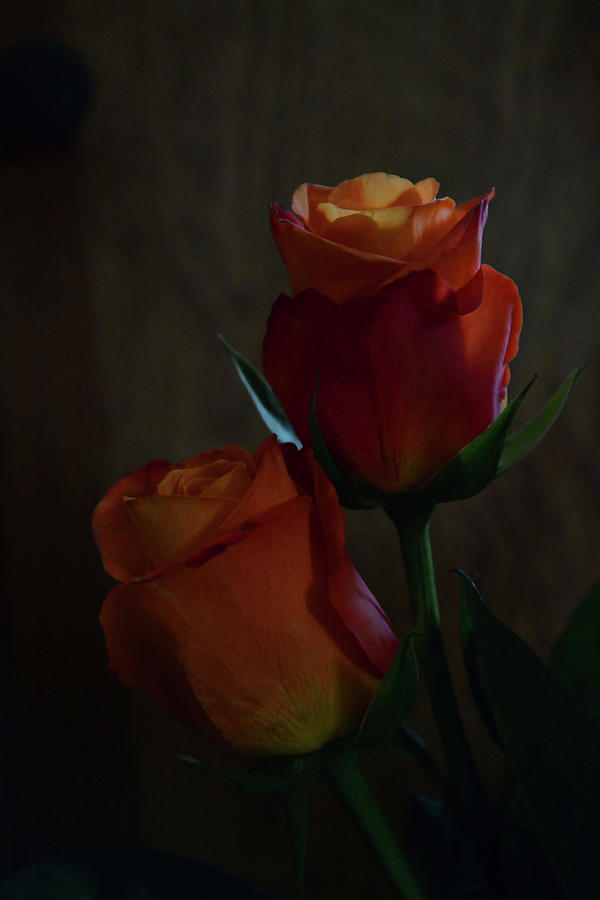 A Pair Of Roses In The Dark Photograph