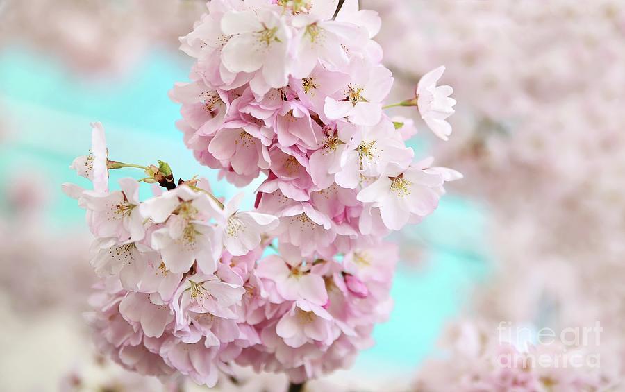 A Pastel Spring Photograph