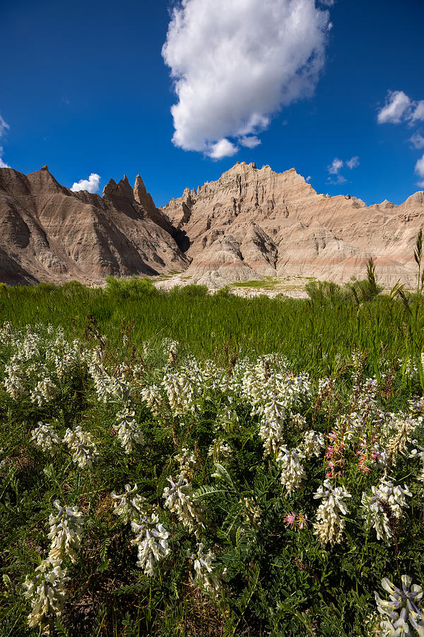 Badlands National Park Photograph - Badlands N Flowers by Aaron J Groen