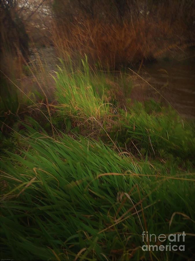 A Pond Moment Digital Art