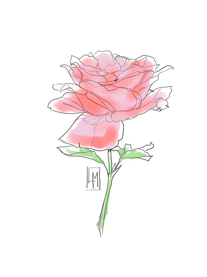 Plant Drawing - A Red Rose by Luisa Millicent