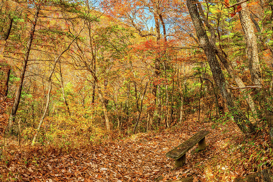 A Restful Spot In The Woods Photograph