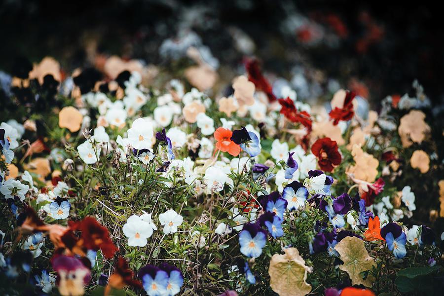 A Sea Of Colour Photograph