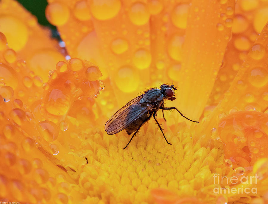 A Small Fly Photograph