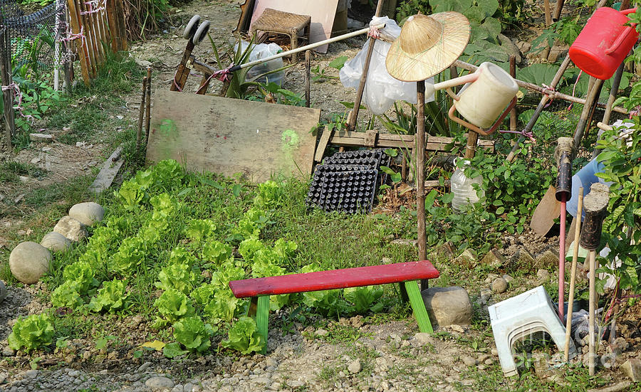 A Small Urban Vegetable Garden by Yali Shi