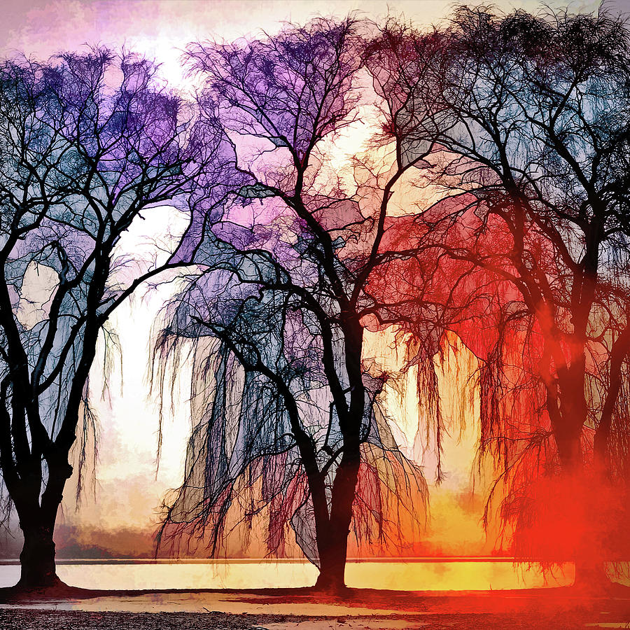 A Song Of Trees Photograph