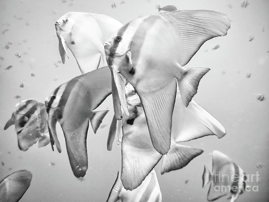 Aquarium Fish Photograph - Tropical aquarium fish by Stefano Senise