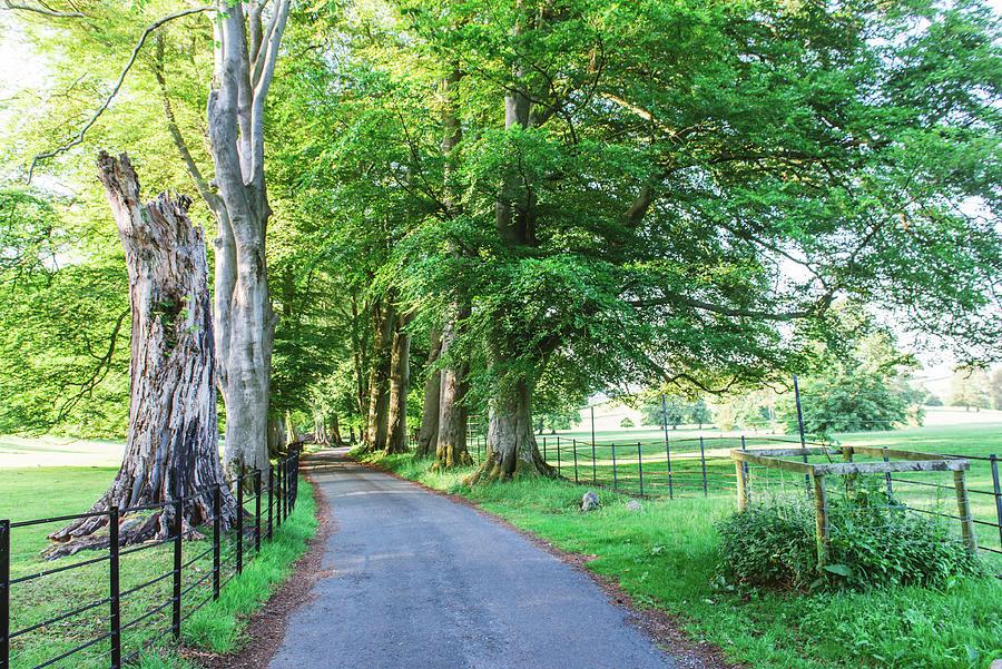 A Sunlit Track Running Through The Dallam Park Estate. Cumbria, England Photograph