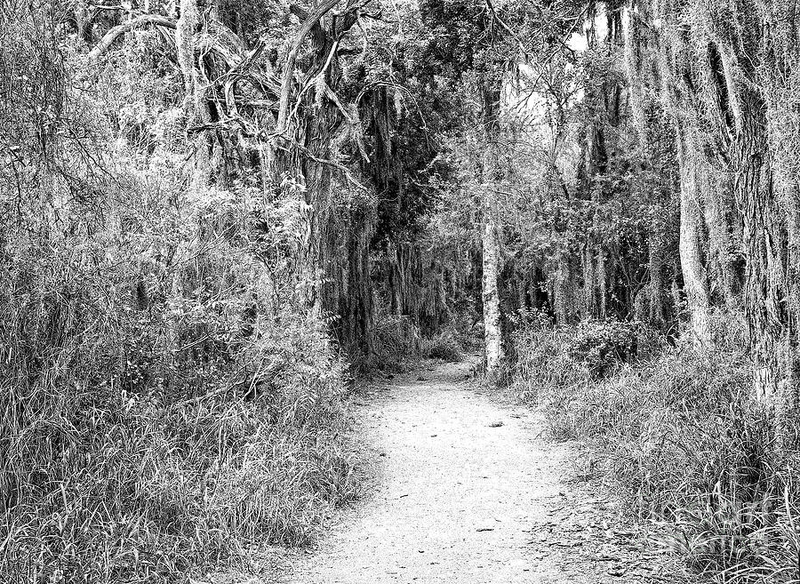 A Trail At Santa Anna Photograph