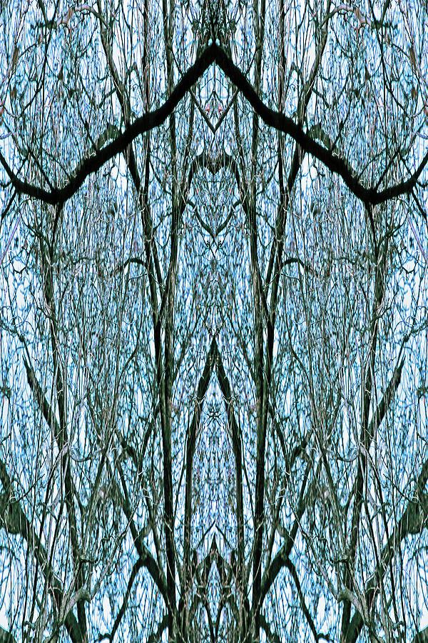 A Tree Limb Mirror Abstract - The Face Of Cruella Photograph