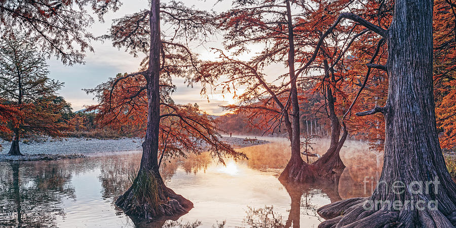 A View through the Changing Bald Cypresses at the Frio River - Garner State Park - Concan - Texas by Silvio Ligutti