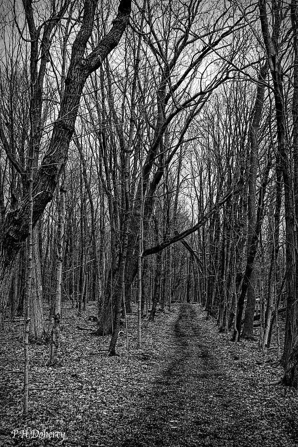 A Walk In The Woods Photograph