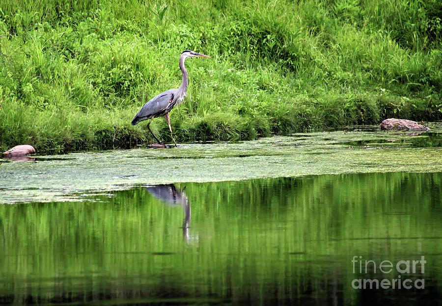 A Walk on the Wild Side by Karen Adams