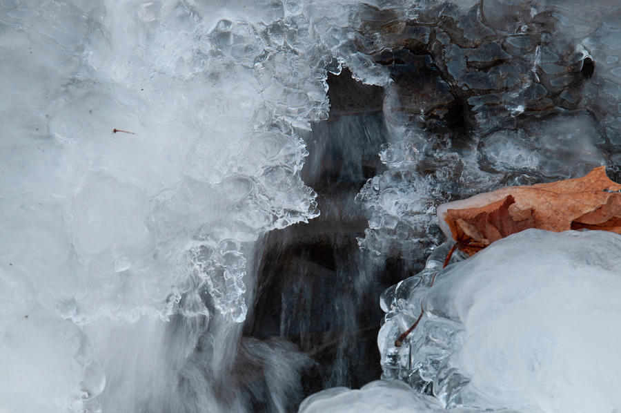A water snake in her ice cave by Lieve Snellings