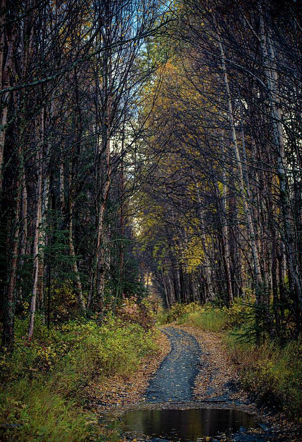 Abandoned Path Photograph