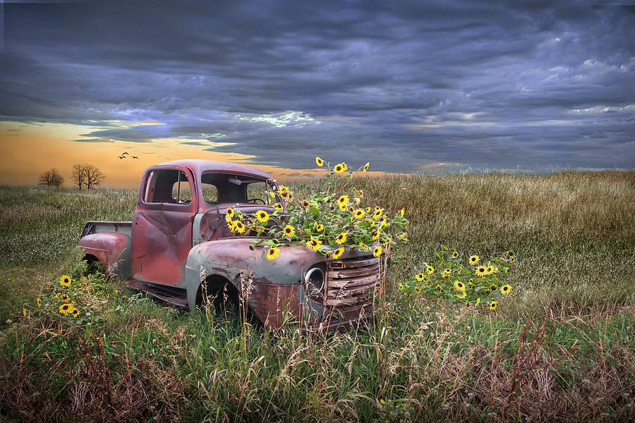 Abandoned Vintage Ford Truck With Blackeyed Susan Yellow Flowers Photograph
