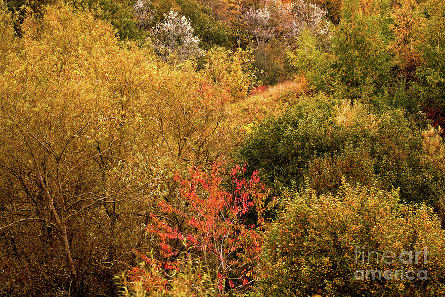 Abstract Valley Treeline Photograph