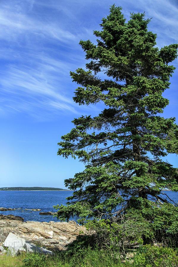 Acadia Beauty Photograph