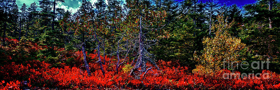 Acadia National Park Gorham mountain trail Head foliage Maine US by Tom Jelen