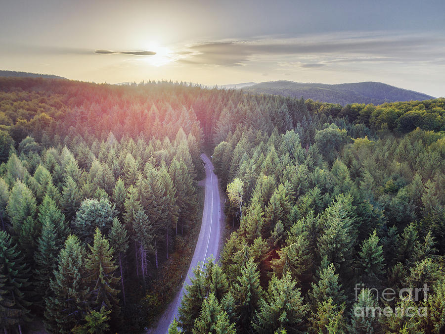 Aerial Nature Scenic Landscape Of Pine Trees And Driving Road In Photograph By Jelena Jovanovic