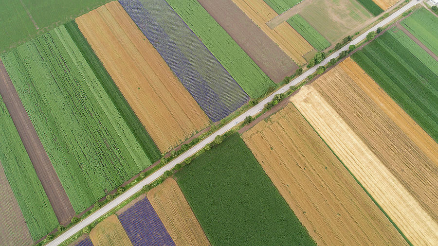 Agriculture Photograph - Aerial view of fields with various types of agriculture.  by Michael Dechev