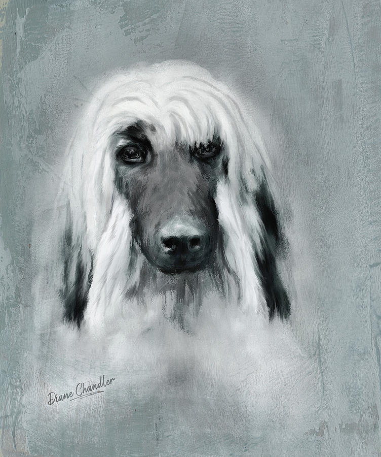 Afghan Hound Puppy by Diane Chandler