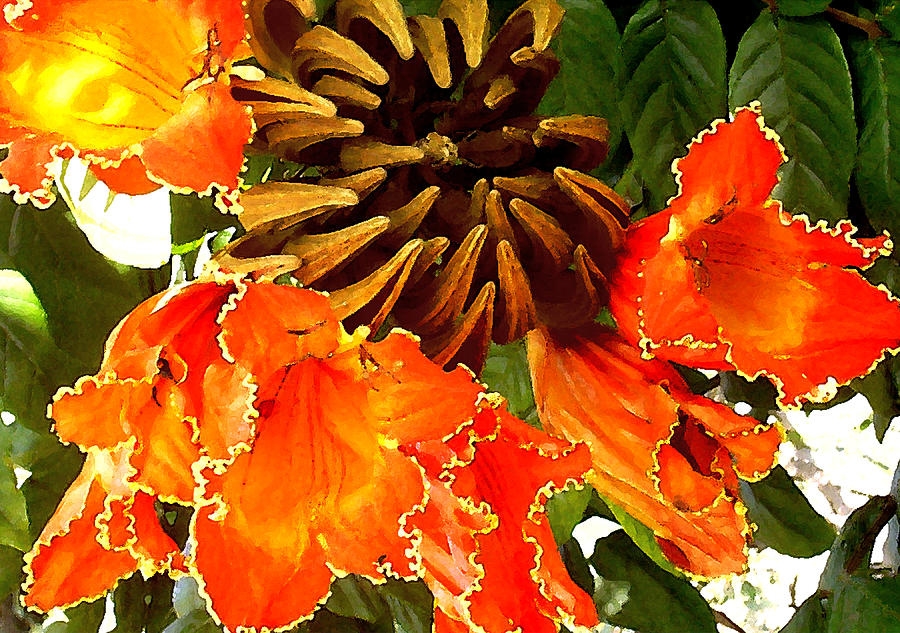 Hawaii Photograph - African Tulip Tree by James Temple