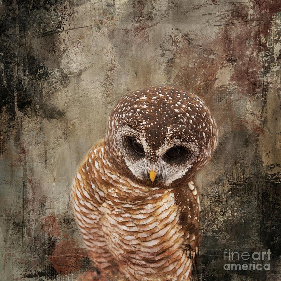 African Wood Owl by Eva Lechner