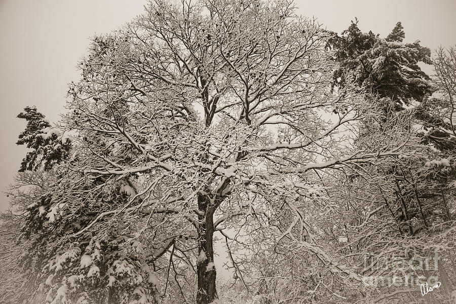 After a Fresh Snow by Alana Ranney