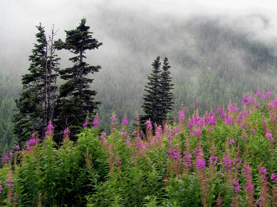 Alaska Pines and Wildflowers Photograph by Karen Zuk Rosenblatt
