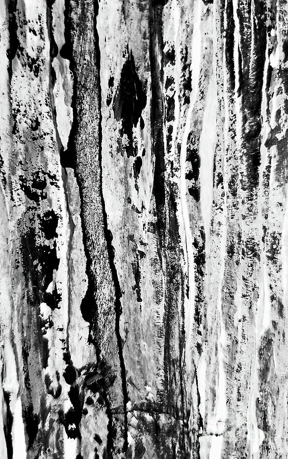 All About Trees Mixed Media