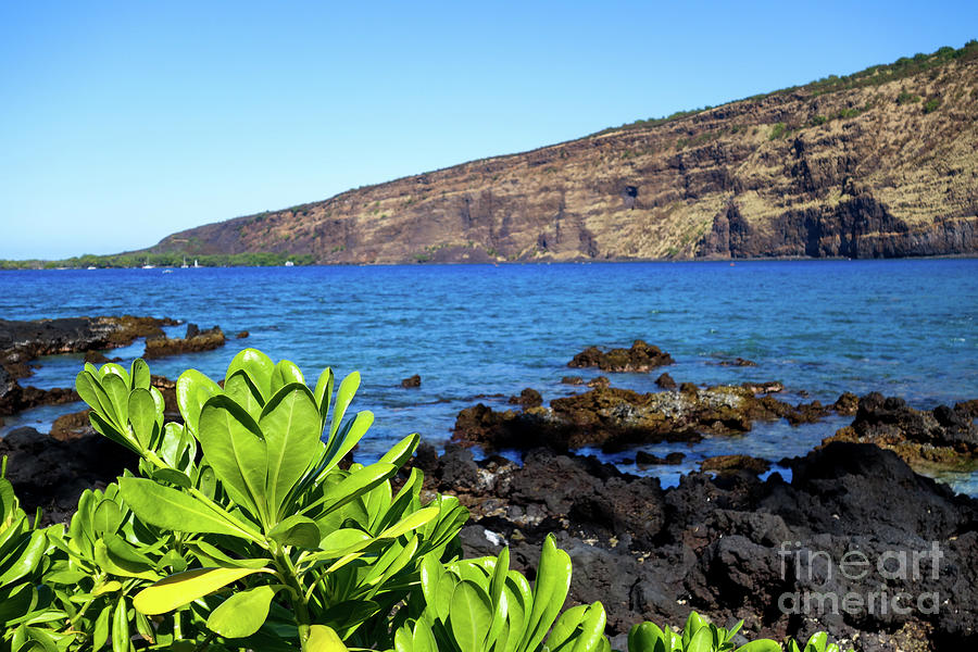 All The Colors Of Kealakekua Bay Photograph
