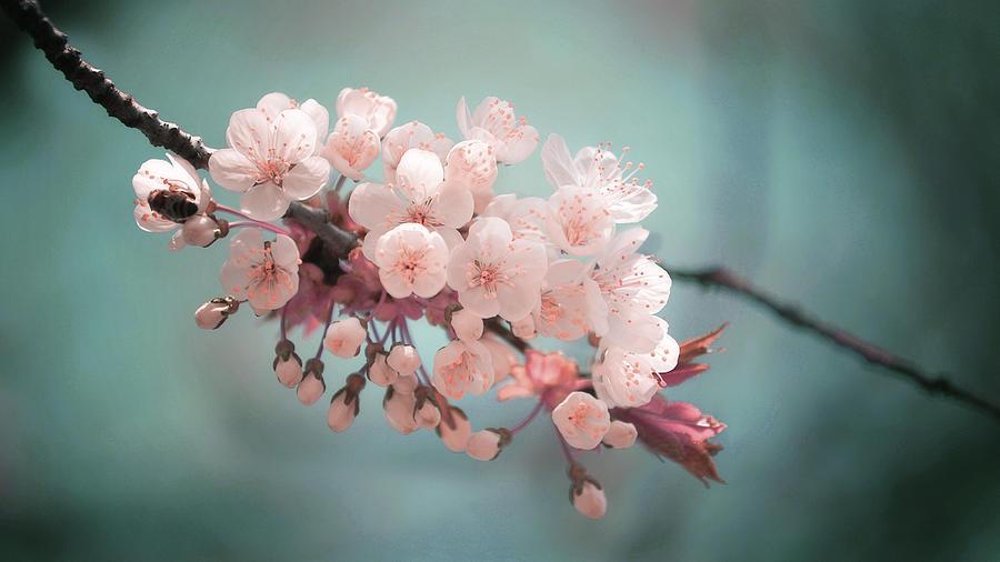 Almond Blossom - Surreal Art By Ahmet Asar Digital Art