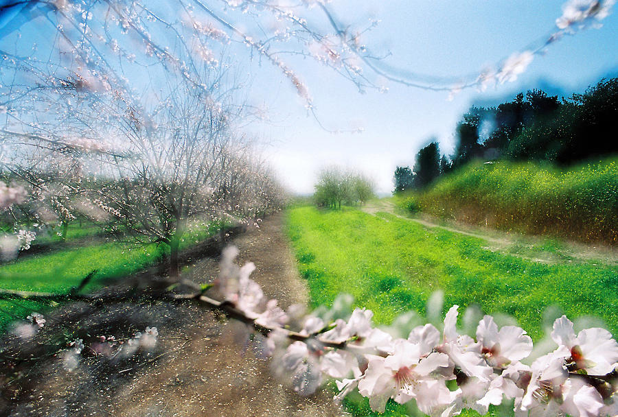 Almonds Photograph