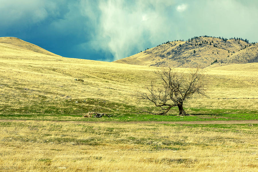 Montana Photograph - Alone Before the Storm by Bryan Spellman