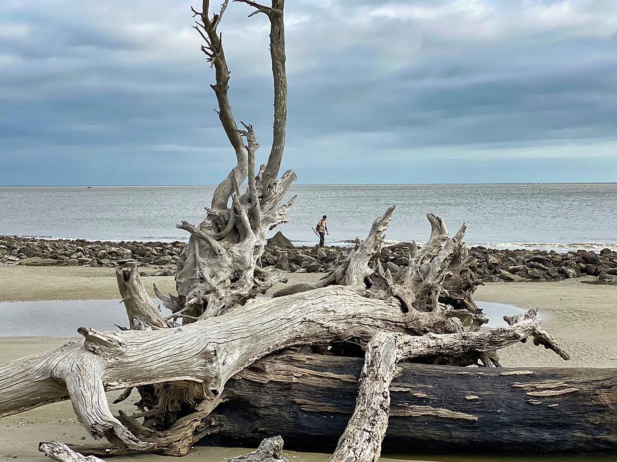 Driftwood Beach Photograph - Alone by Cindy Keen