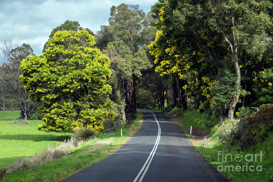 Along the Road to Nannup by Elaine Teague