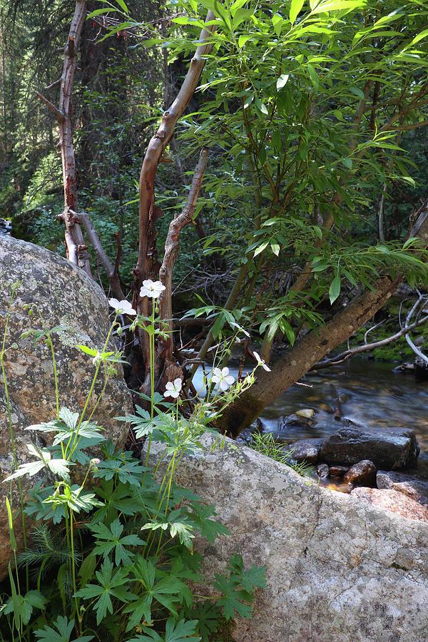 Along Timber Lake Creek Photograph