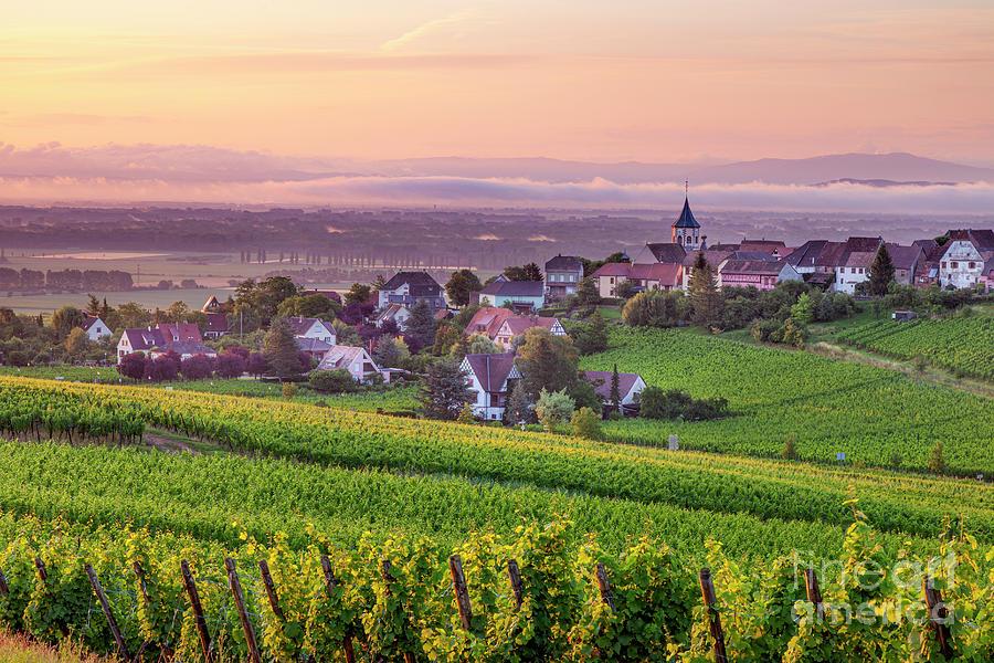 Alsace Dawn - Zellenberg France Photograph