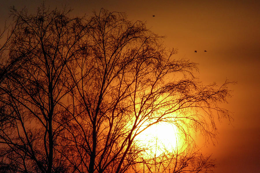 Amber Sun Photograph