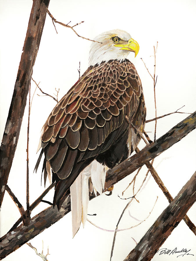 American Bald Eagle by Bill Dunkley