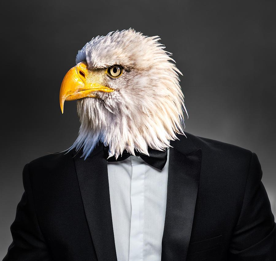 American Bald Eagle In Tuxedo Suit Surreal Digital Art