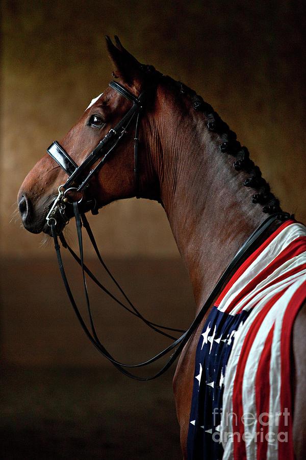 Horse Photograph - American Dream by Shelley Paulson