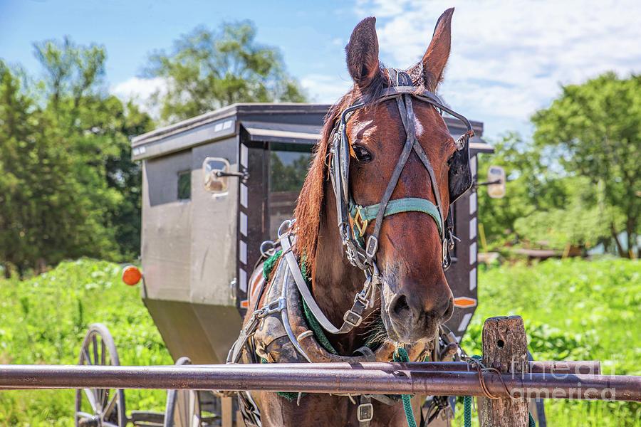 Amish Parking Photograph