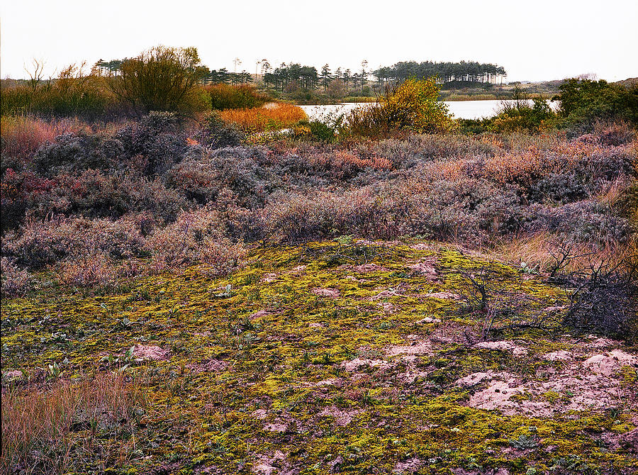 Amsterdam Water Management Dunes-3 Photograph