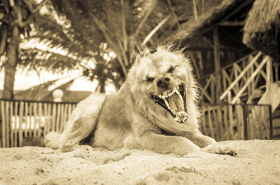 An aggressive dog barking Photograph by Andrew Lever
