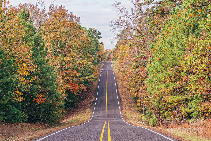 An Explosion of Colors through the Rolling Hills of East Texas Piney Woods Region - Marietta  by Silvio Ligutti